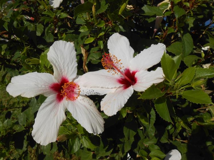 06 Bella Vista Village flowers