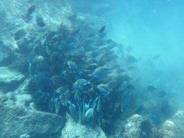 09 Tachai island snorkeling fish