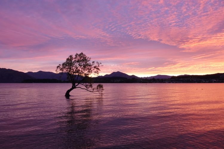 13 That Wanaka Tree sunrise
