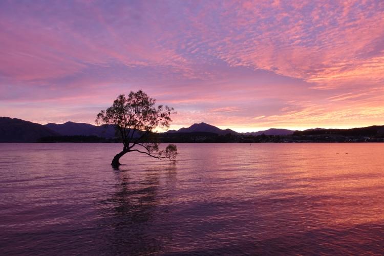 13 That Wanaka Tree sunrise