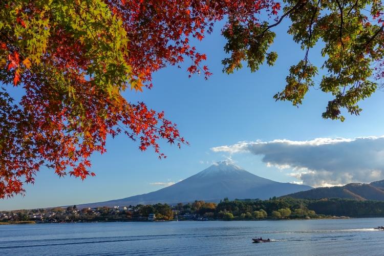 08 Kawaguchiko Mount Fuji autumn leaves