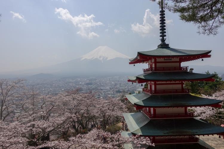06 Chureito Pagoda sakura