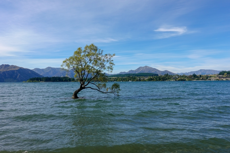 02 That Wanaka Tree